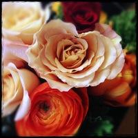 flowers_1468.JPGのサムネール画像